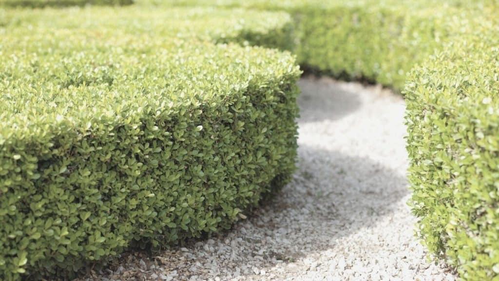 3 Reasons God Built a Hedge of Thorns